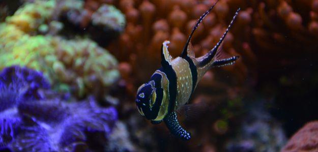 Filder Aquaristik