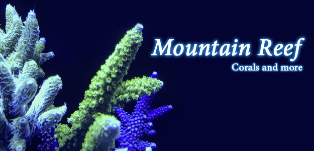 Mountain Reef - Corals and More
