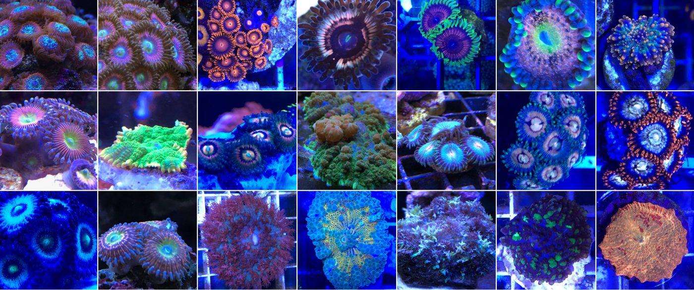 Farmer-Vorstellung Teck Corals
