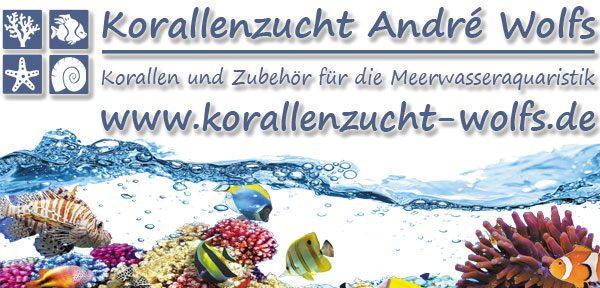 Korallenzucht André Wolfs