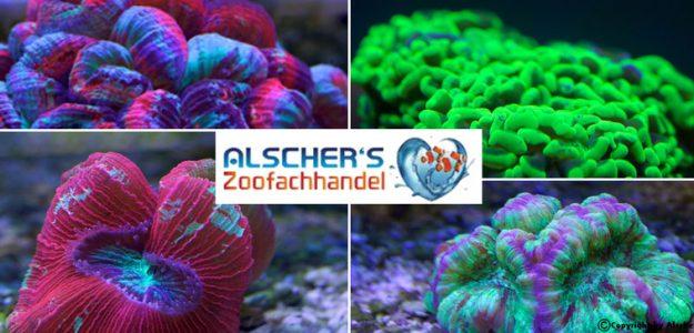 Alschers - Aquaristik - Produkte