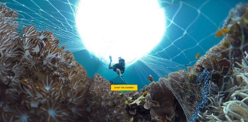 Der Weg vom Riff in das Aquarium