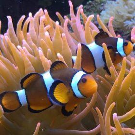 Nanggu Reef
