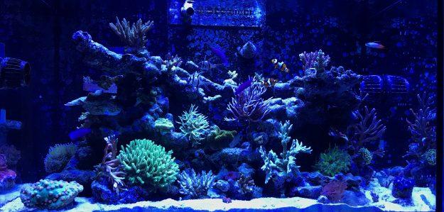 Noah's Korallenshop