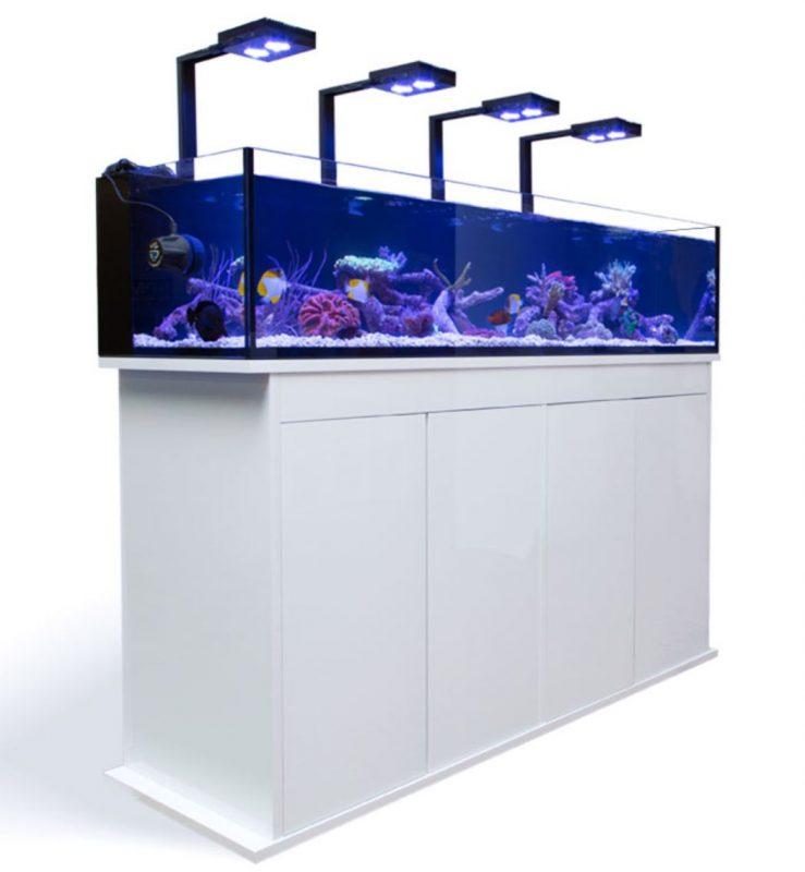 meerwasseraquarium, Meerwasseraquarium – Alles was man wissen sollte