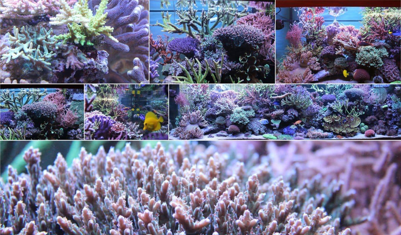 Korallenpaket online kaufen