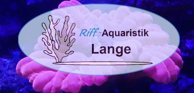 Riff-Aquaristik-Lange