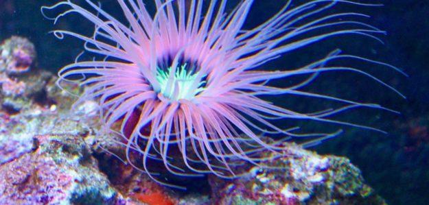 Dreamworld_Corals