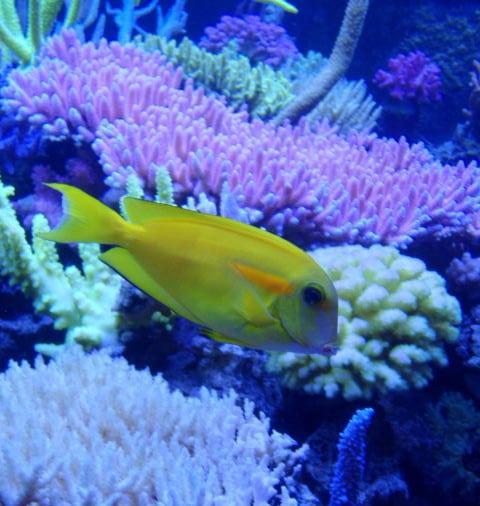 t5-coral-light-new-generation-80-w