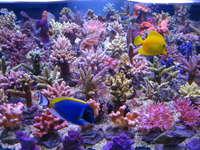 t5-coral-light-54-w