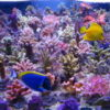 t5-coral-light-fiji-purple-54-w