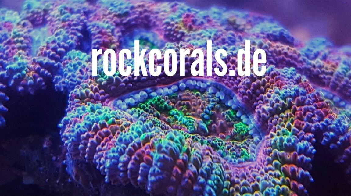 RockCorals