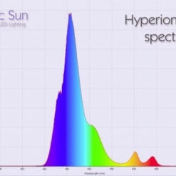Pacific Sun Hybrid