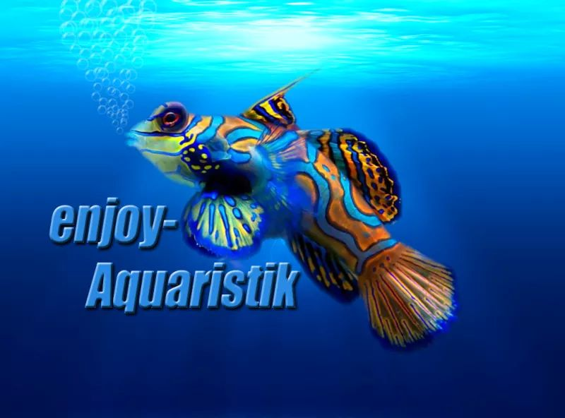 Enjoy Aquaristik