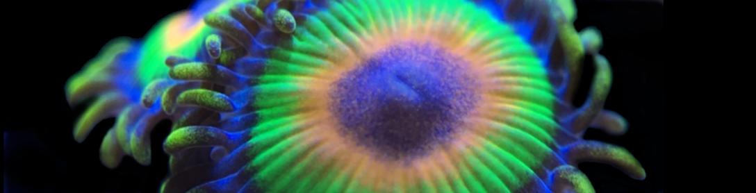 Teck-Corals