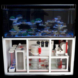 Reeftank Picture