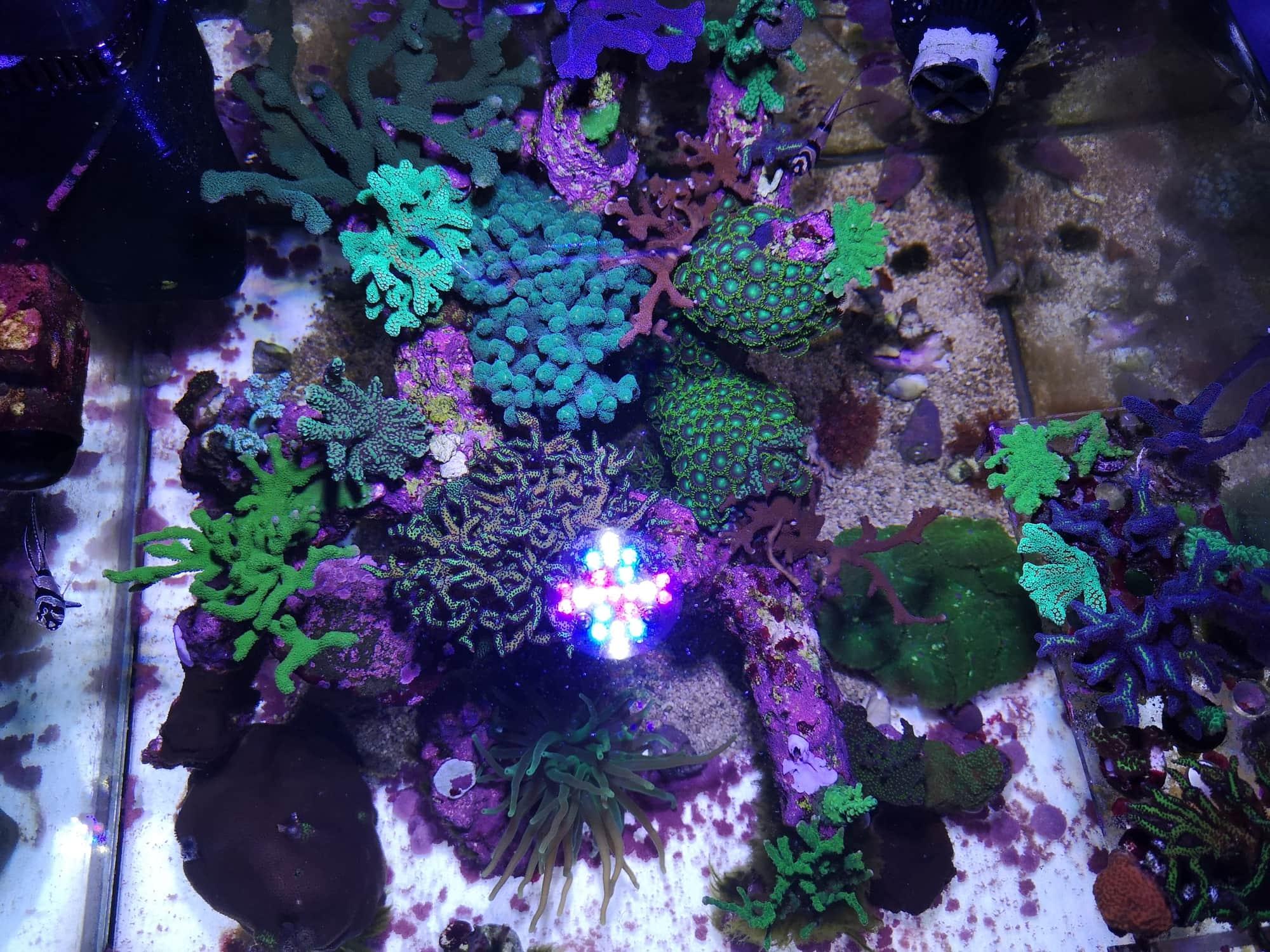 Berg-Reef