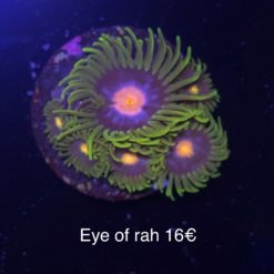 Zoa Marry Jane