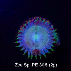Überraschungs Zoa
