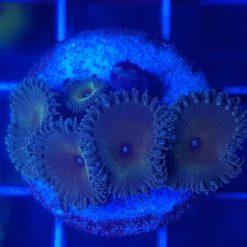 Korallen entdecken