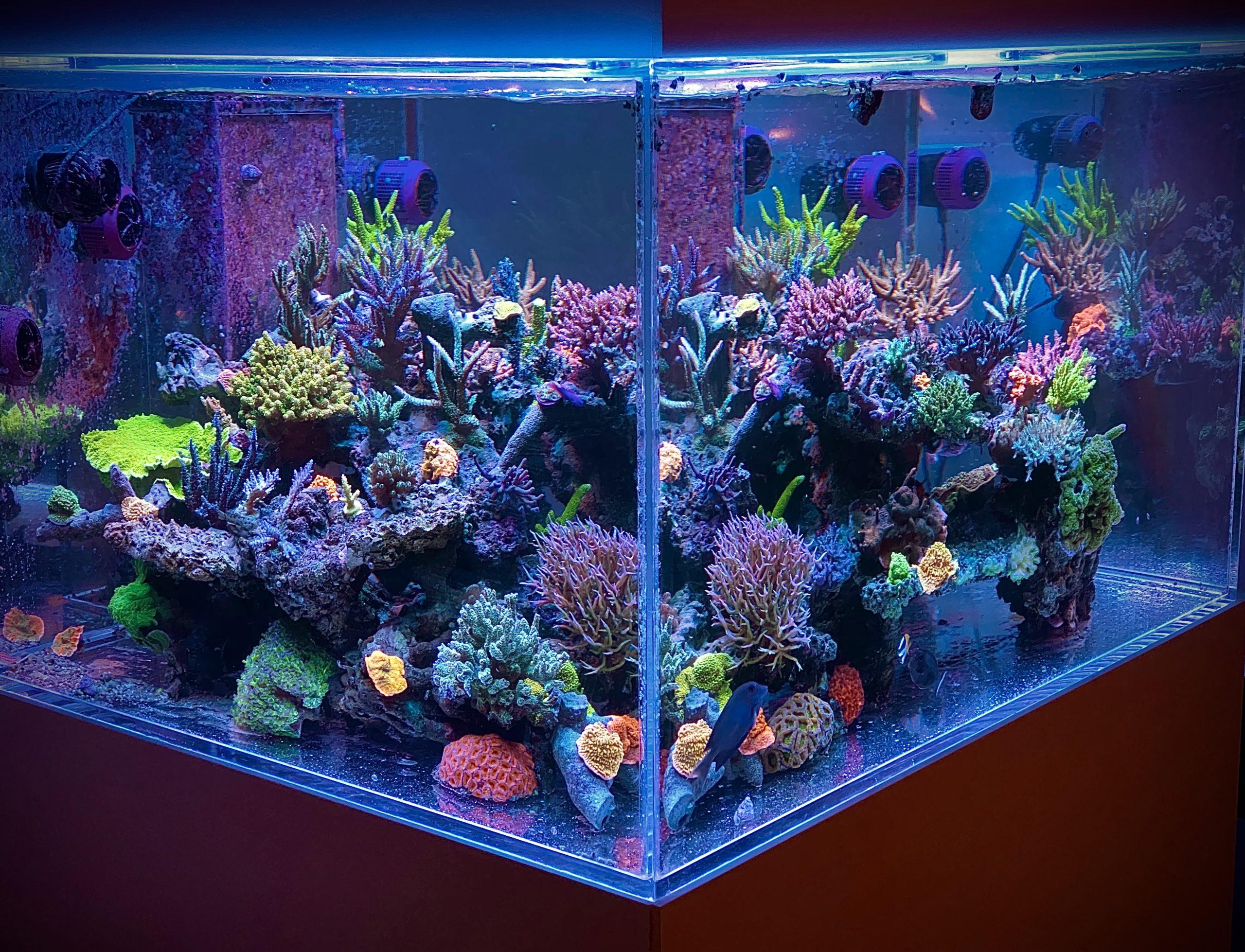 Coralsstore