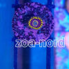 Zoanthus rot