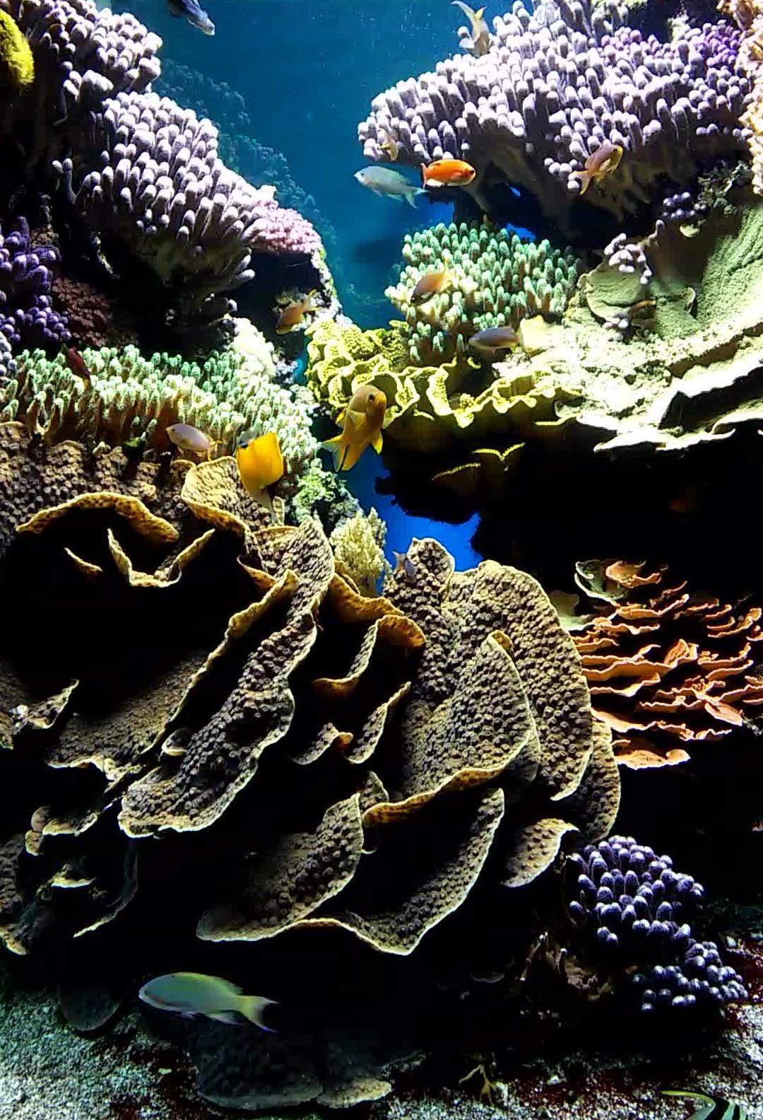 Brunswick Corals