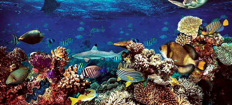 Ocean Corals