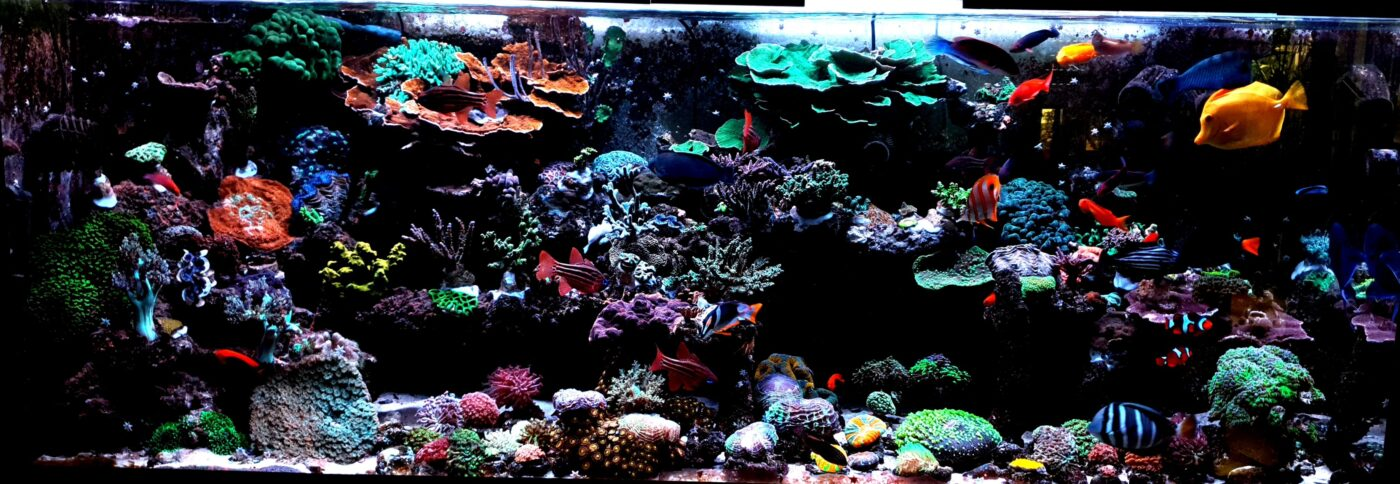 Home Aquarium Korall Factory