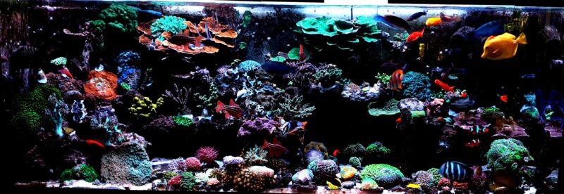 Home Aquarium Korallenzone