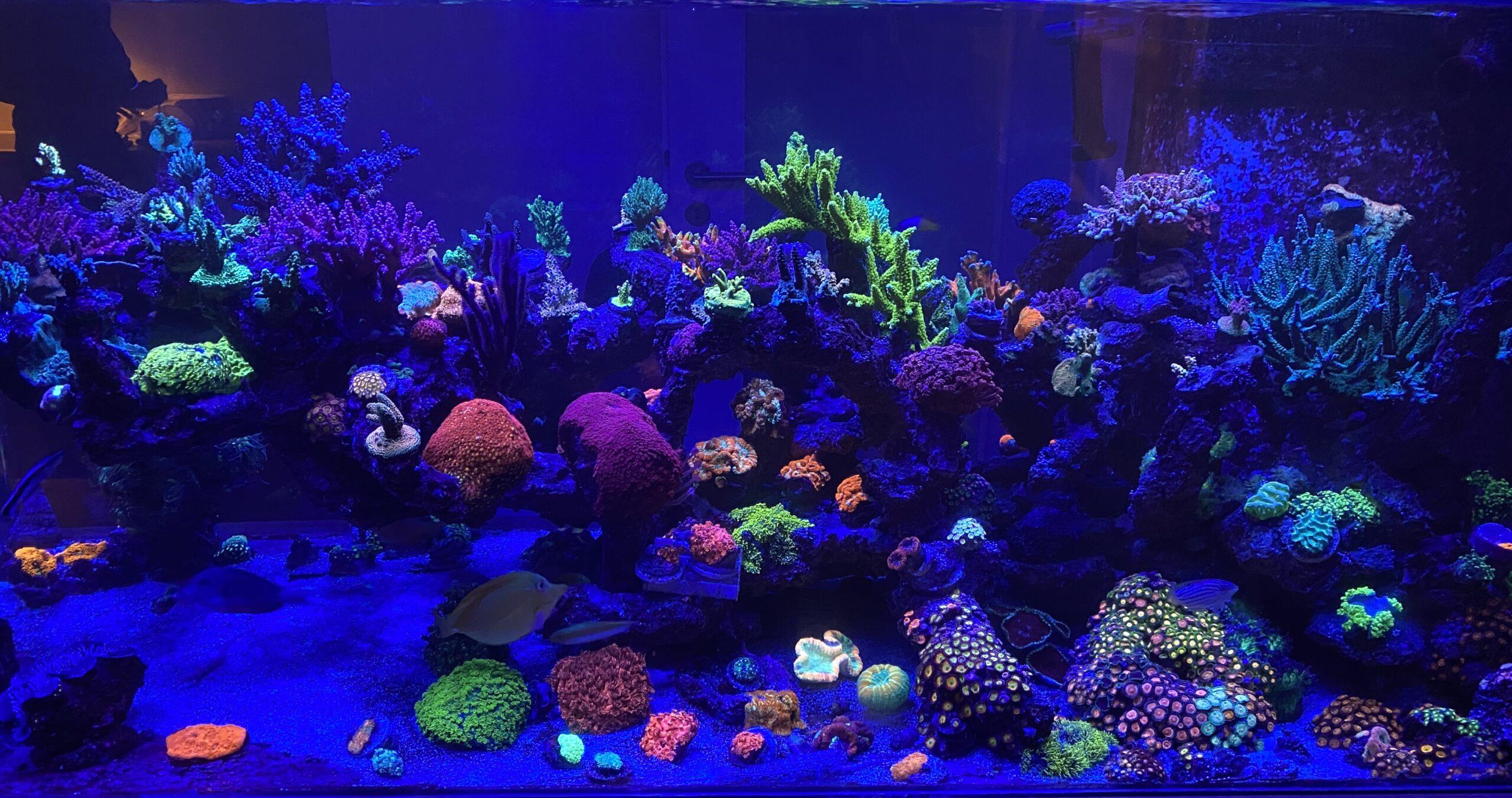 munich reef