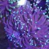 RC Korallen Mix. 12 Korallen