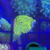 XXL Korallen Paket für Ramona