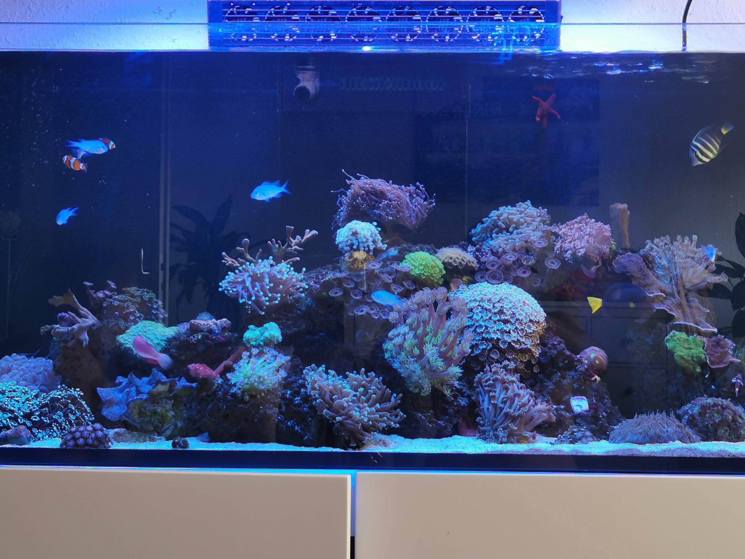 Lehry's Korallenstube