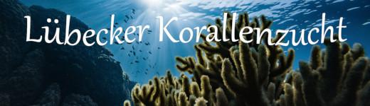 Lübecker Korallenzucht