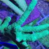 Acropora sp. WYSIWYG