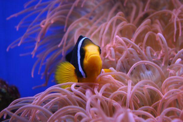 Osmoseanlage für das Meerwasseraquarium