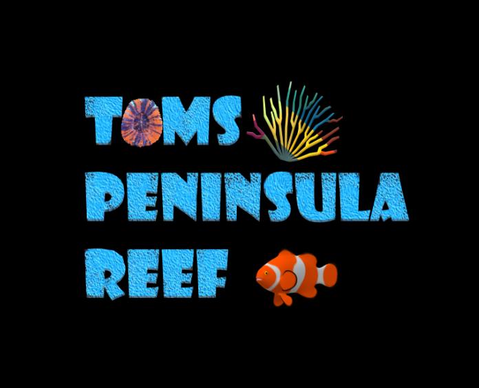 Toms Peninsula Korallen