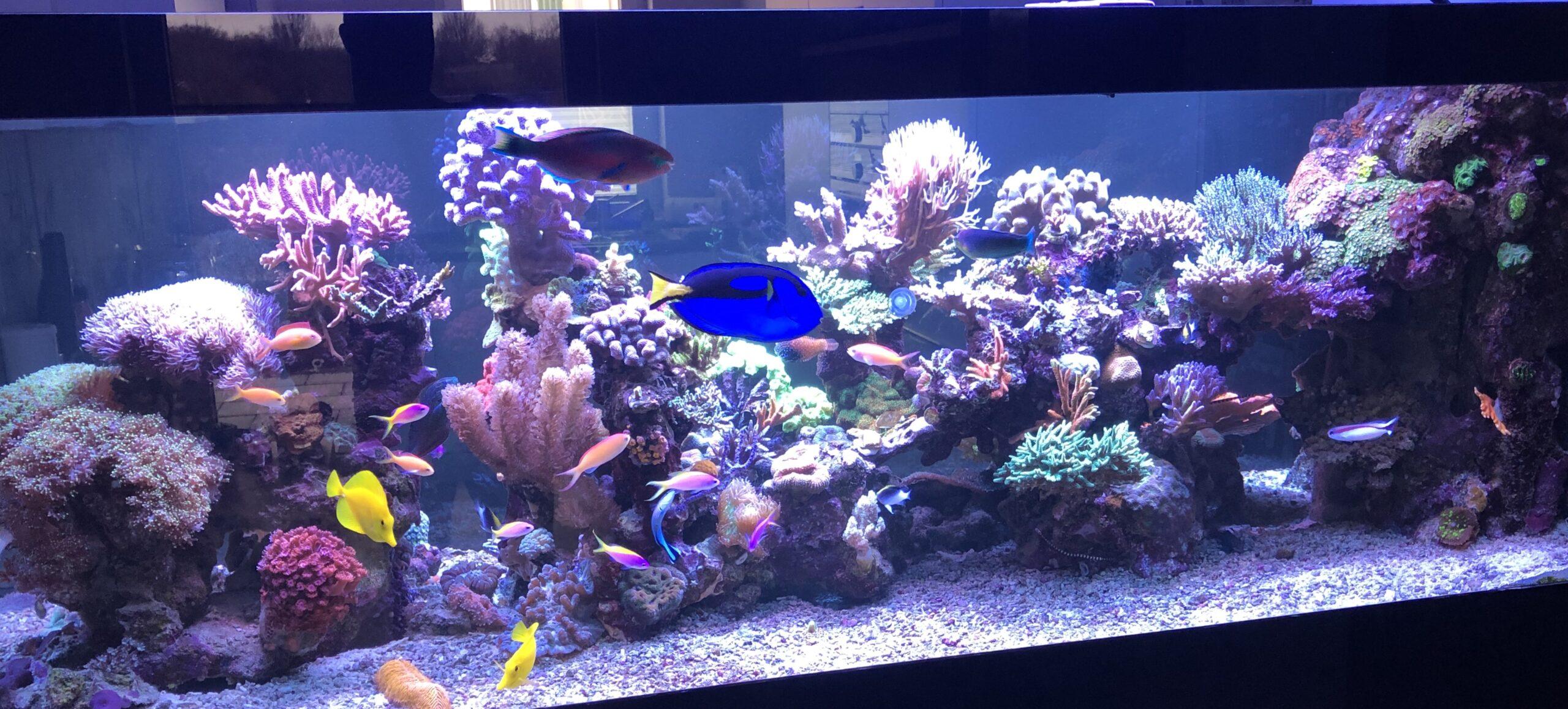 Home Corals