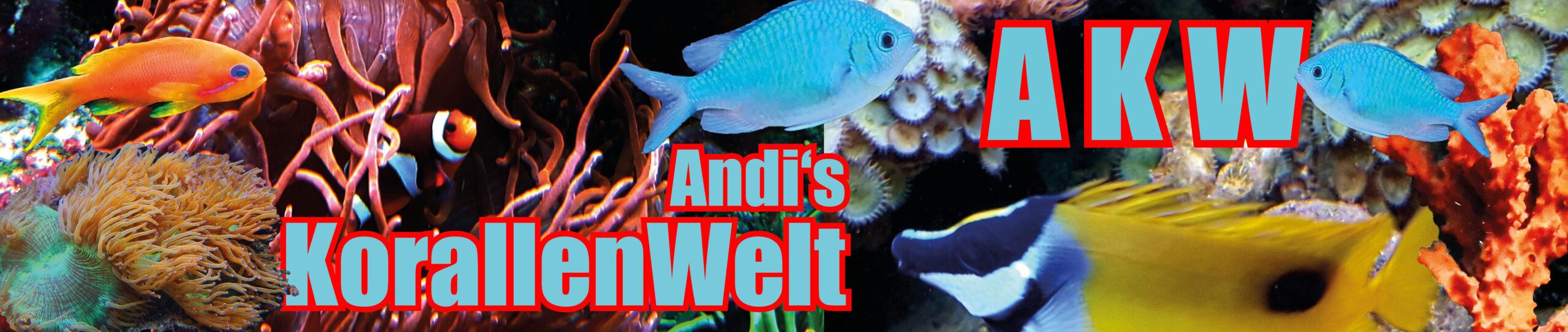 Andi's Korallenwelt