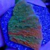 Acropora beige blau, weiße Polypen