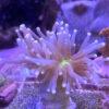 Besichtigungstermin bei Green Corals in Braunschweig