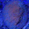 "Sinularia Sp.LIGHT NEON GREEN ""WYSIWYG"""