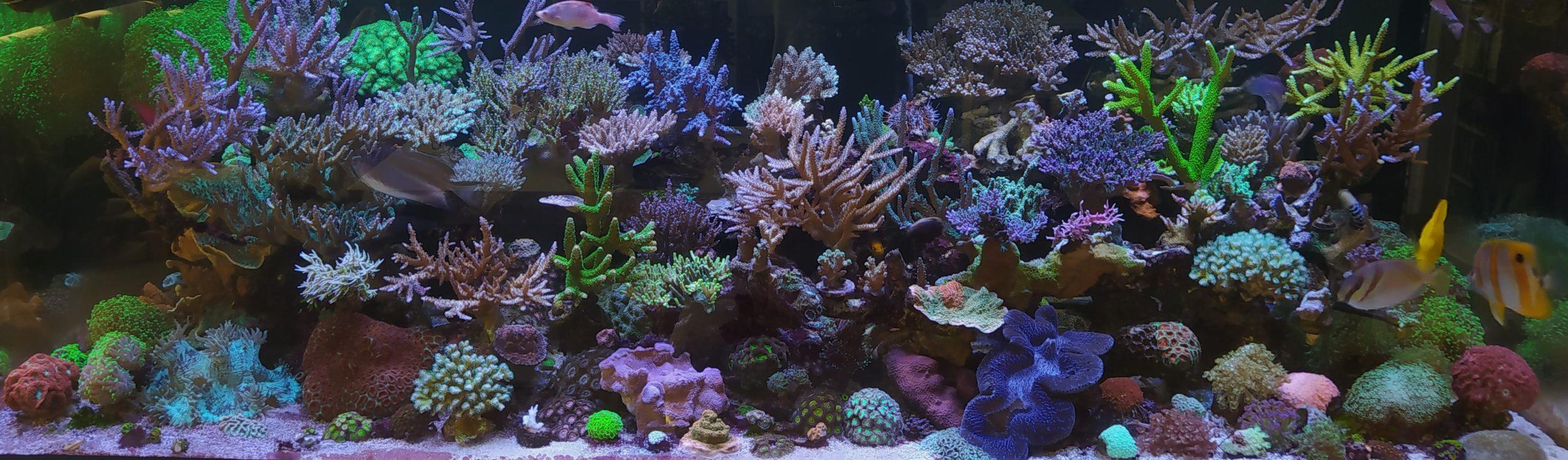 Yukis Korallenparadies